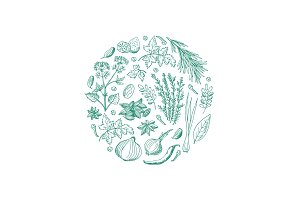 Vector hand drawn herbs and spices in circle shape illustration