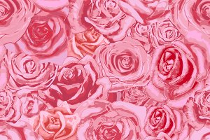 Beautiful bright pink rosebuds