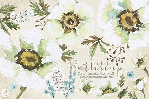 Aquarelle white buttercup