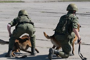 fighting dogs military