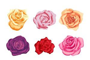 Set of nine colorful rosebuds