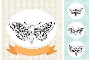 Hand-drawn vector moths