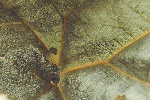 Close-Up on a Dark Green Leaf