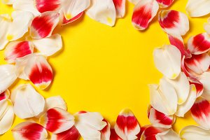 Feminine stylish mock up with tulip flower, petals. Copy space for your design, weddings, invitations, blogs, cards. Overhead top view. Flat lay red petals, white tulip flower on yellow background.