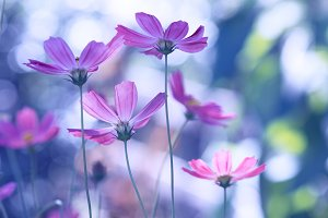 Delicate wild flowers of a purple color on a beautiful background.
