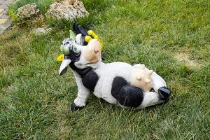 Toy cow lying upside udder