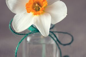 Narcissus flower in a small glass jar