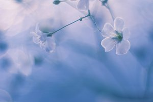 Little flowers in a vase with a beautiful tone and soft focus