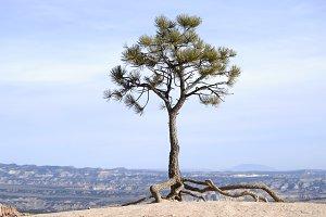 Walkig tree