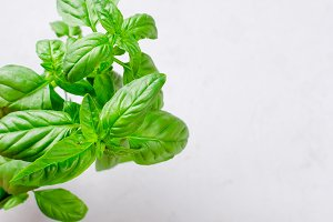 Bunch of fresh green basil