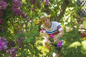 portrait of male gardener adjusting roses flowers in summer cottage yard