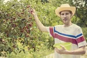 portrait of young man in casual and summer hat in garden picking fruits in basket vintage toned