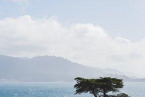 tree on the coast