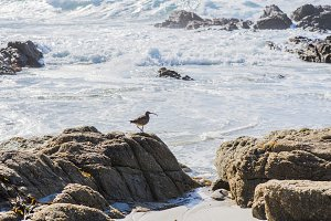 sea bird at the coast