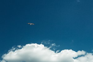 Pigeon Fly In The Blue Sky