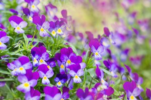 Beautiful flowers summer background