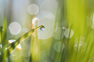 A drop of dew in the green grass. Beautiful reflection of the sky