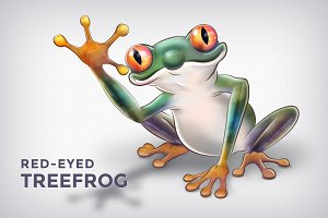 Red-Eyed Treefrog Illustration