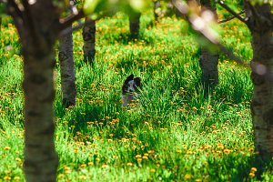 Orchard with Dog in Dandelions