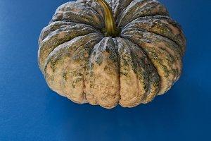 Halloween thanksgiving green pumpkin
