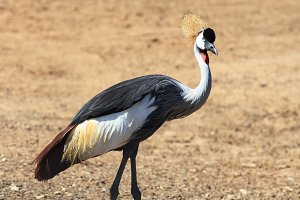Elegant and graceful bird