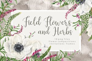 Watercolor field flowers and herbs