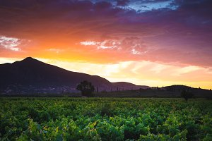 Mountain valley with vineyard at sun