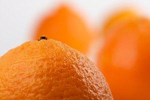 Clementine Oranges on White
