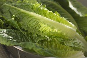 Fresh Romain Lettuce