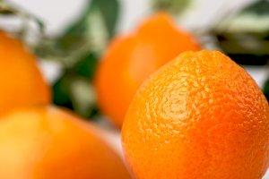 Fresh Organic Clementine Oranges