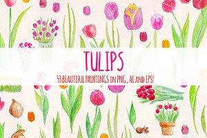 53 Bright Tulip Watercolor Clip Art