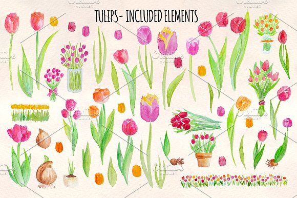 53 Bright Tulip Watercolor Clip Art in Illustrations - product preview 1