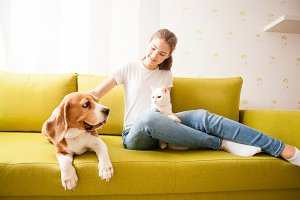 beagle, turkish angora and their owner