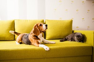 happy pets are relaxing at home