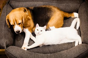 good relationships between cat and dog