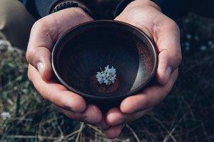 Man hands holding flower in rustic bowl. Herbal tea preparing detail.