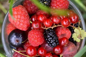 fresh organic summer berries