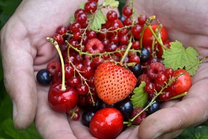 Fresh organic summer berries in hand