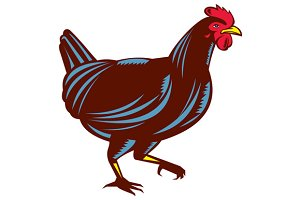 Chicken Hen Walking Side Woodcut