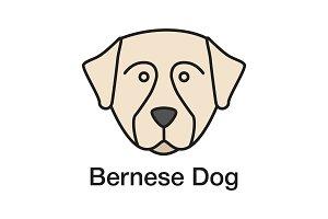 Bernese Mountain dog color icon