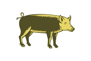 Tamworth Pig Side Woodcut
