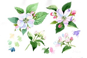 Wildflower apple blossom PNG set