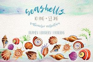 Watercolor summer beach seashell PNG