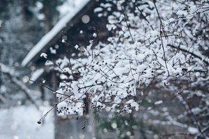 Natural winter scene in a village