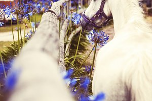 The White Horse Among Blue Flowers