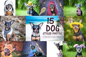 15 Dog Styled Photos