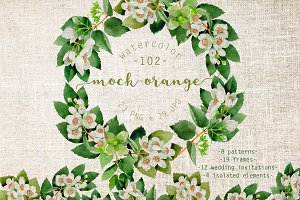 Mock-orange PNG watercolor set