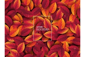 3d realistic autumn leaves with water drop. Autumnal background in red, orange and yellow colors. Design for web, print, wallpaper, vector illustration.