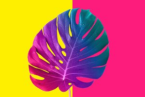 Tropical multicolored gradient monster leaf. Minimal surrealism.