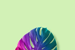 Tropical multicolored gradient monster leaves.